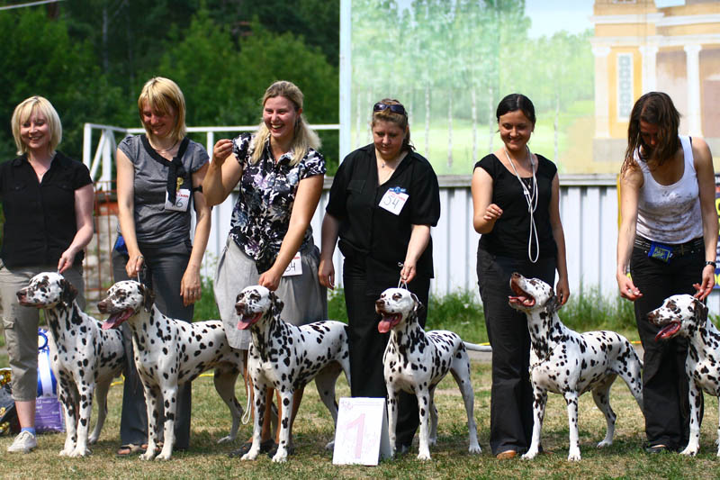 kennel competirion